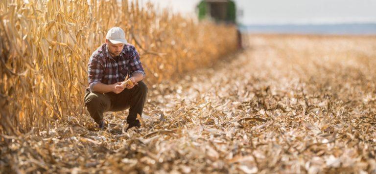 avvocato per imprenditori agricoli